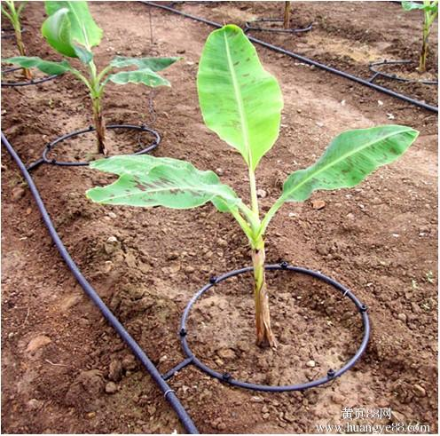 What is the difference between drip irrigation tubing and drip tape?