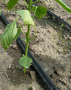 How to solve the problem in drip irrigation supplies?