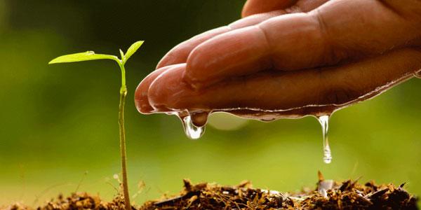 drip irrigation root