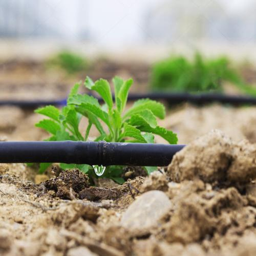 Three advantages drip irrigation and two misunderstandings